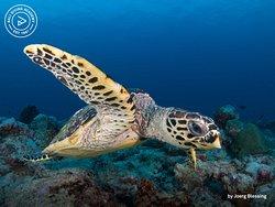 Bali Diving Academy Lembongan