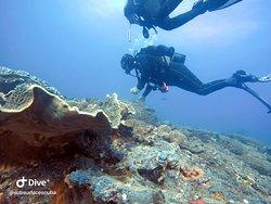 Cruisin Flinders Reef
