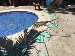 Poolside photo opp