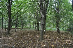 Heusenstamm Wood