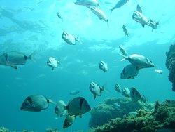 Cap Ferrat Diving