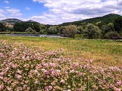 Été fleuri aux Etangs du Bord de Loire