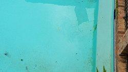 Pool with algae, litter in it.