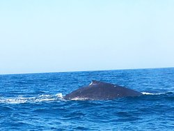 Ocean Safari with clients to see the migration of the whales.