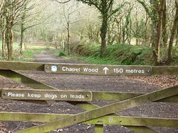 RSPB Chapel Wood Nature Reserve