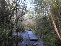 Camino lleno de árboles, y con puentecitos en algunos sectores.