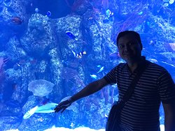 with colorful fish