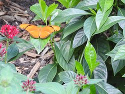 Visit the butterfly house.
