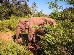 Safari mit Lahiru sehr empfehlenswert !!