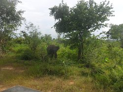 You can see Elephants very easily at Udawalawa National Park.