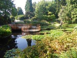 Plat form on lily pond