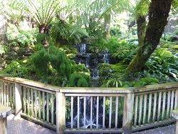 Fernery garden