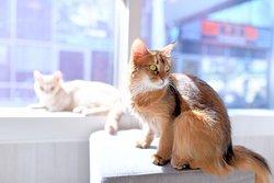 猫カフェMOCHA原宿竹下通り店