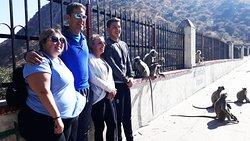 Cycling in Udaipur Rajasthan India (friendly monkeys)