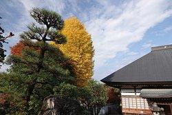 西善寺:コミネカエデだけじゃない!松と銀杏と楓