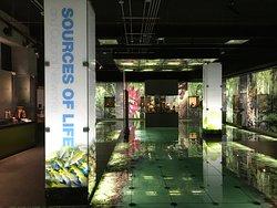 Museo del Jade y la Cultura Precolombina