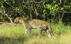 2019/03/24.    Yala National Park 🏞 srilanka