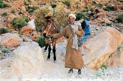 Hier kommt ein Mann mit einem Esel, auf dem Heimweg in die Todra Schlucht Fotografieren immer fragen dann zahlen!!