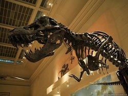 Smithsonian Museum of Natural History Washington, DC