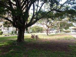 園内の奇木