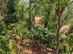 Living in the jungle can be intimidating, staying a little away from the jungle but away from people does lots better to enjoy the nature