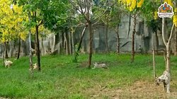 អាកាសធាតុកាន់តែក្តៅ ភ្លើងក៏ដាច់ញឹកញាប់ ហើយមិនដឹងថាគួរទៅទីណាមែនទេ ក្រៅពីដើរមើលសត្វផ្សេងៗ ពុកម៉ែបងប្អូនអាចមកកំសាន្តក៏ដូចជាលំហែកាយនៅភ្នំពេញសាហ្វារីដែលសំបូរទៅដោយដើមឈើធំៗ ខ្យល់អាកាសត្រជាក់បរិសុទ្ធ  បានមកម្តងហើយចង់មកម្តងទៀត #phnompenhsafari #zoo #park #lyp