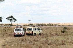 Masai Mara game viewing experience on our 2 nights / 3 days Masai Mara express safari
