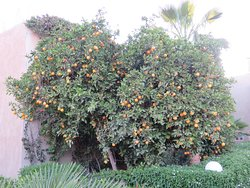 The area around the pool was surrounded by fruit trees