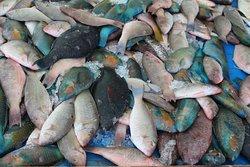 Рыбка из Красного моря