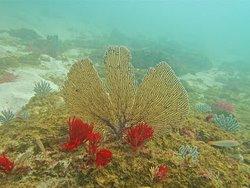 Nice Coral