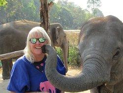 Kissing elephant!