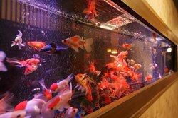 幻想的で鮮やかな美しさを放つアクアオブジェ「金魚のアクアリウム」をご鑑賞いただけます。上田屋のキービジュアルです。