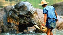 A Khao Sok allez à la rencontre des éléphants et partez pour un trek à travers la foret humide du Parc National. Passez la journée auprès d'une végétation luxuriente et faites une descente le long de la rivière en canoë