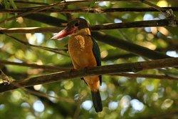 Srilanka animals