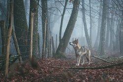 Pet Friendly Hotels in Vermont - Bring Fido. www.madeinnnvermont.com Burlington's Best Pet Stay!