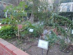 Orto Botanico di Roma - Giardino dei semplici