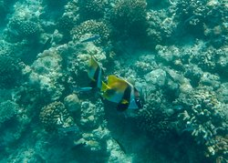 snorkelling off the house reef