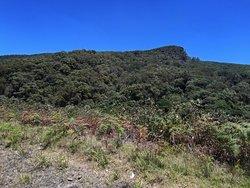 Hill County, pick wilderness, train panoramique trip, highest mountain, bio, diversity plantation, fabrique du thé,tea tasting!