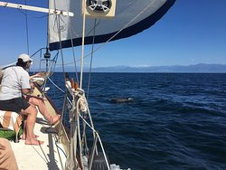 Dolphin off the starboard bow! EcoSail by Pegaso March 21, 2019