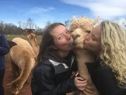 Alpacas of Smith Mountain Lake Farm