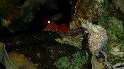 Garnele bei Nacht