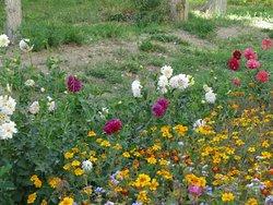 Pamir Botanical Garden