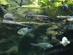 The aquarium created very realistic marine habitats.