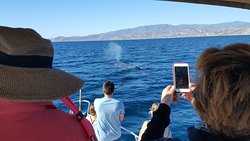 These whales were very curious coming close to the boat.