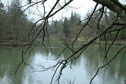 Lake at Wakehurst