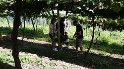 Uvas maravilhosas