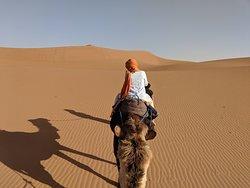 Camel ride in the desert