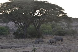 Family of rhino.  Photo by Joseph Jimmerson