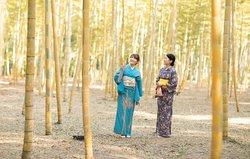 金明孟宗竹。日本一の規模を誇ります。
