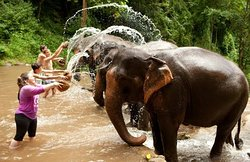 Private transportation to the best Elephant park in Phuket